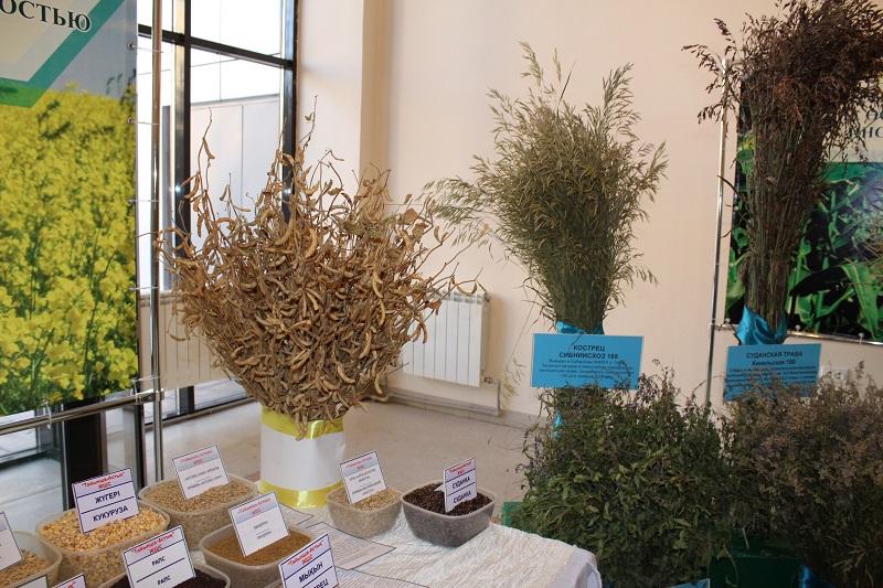 В Казахстане субсидируют производство сельскохозяйственных культур