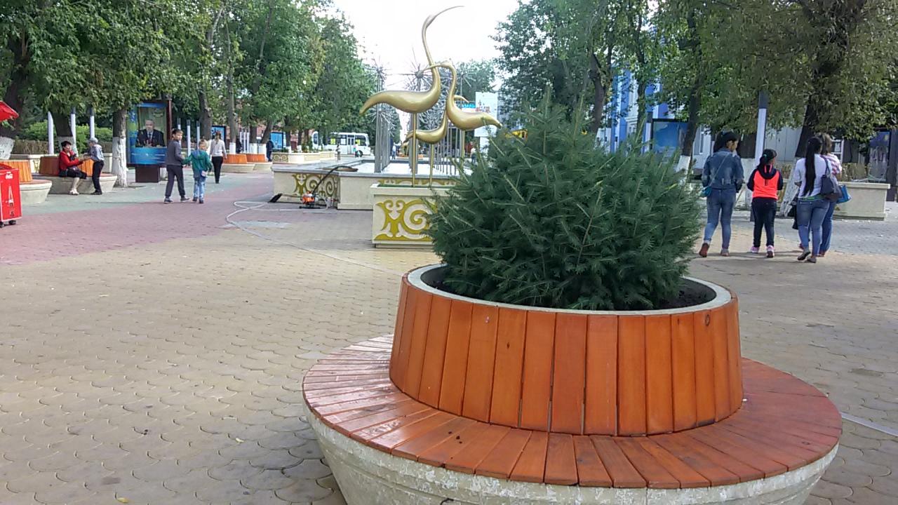 В Петропавловске укладывают газон и высаживают привозные ёлки