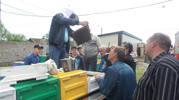 Североказахстанским пчеловодам предложили поехать учиться за рубеж