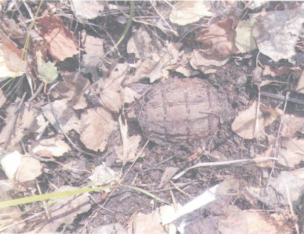 На севере Казахстана в лесу жители нашли гранату досоветских времён