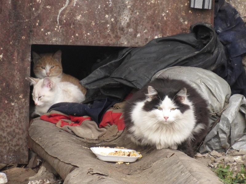 Петропавловск — город сытых бездомных кошек