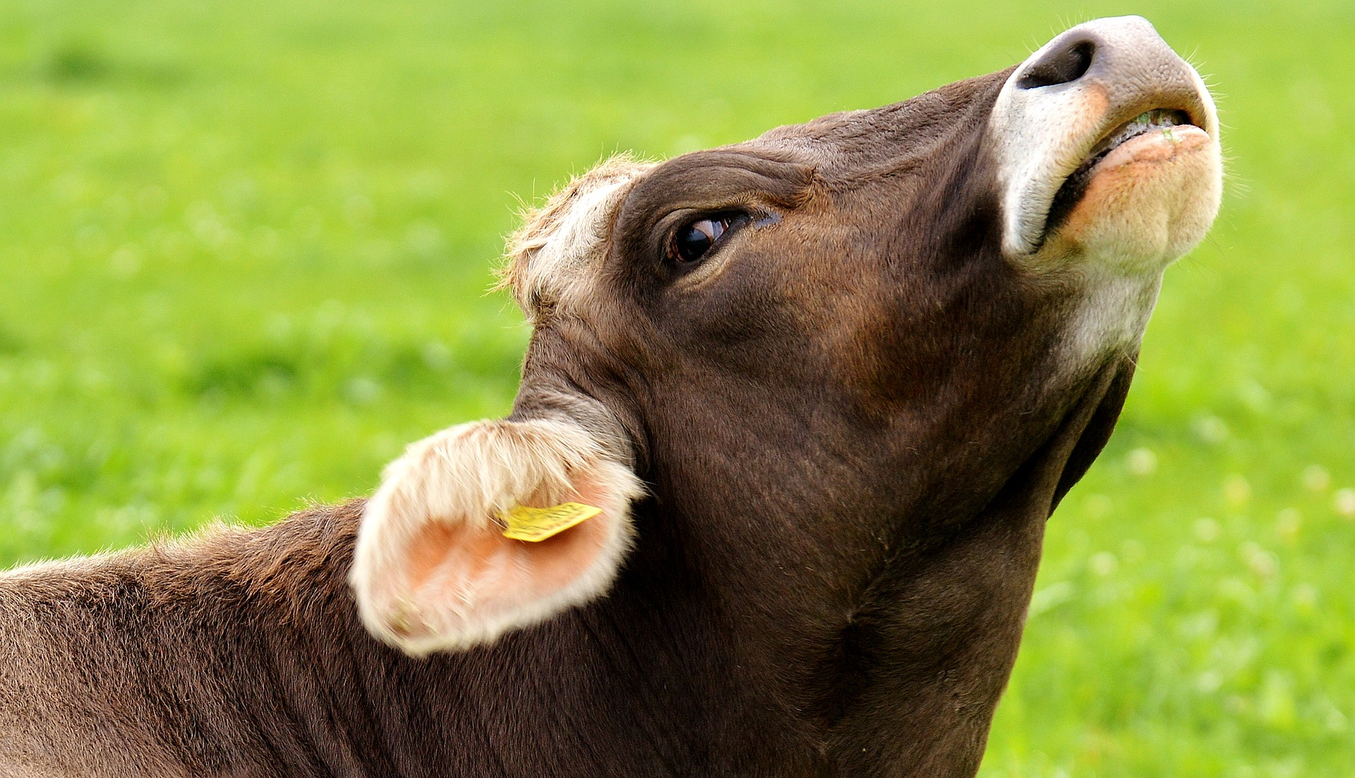 Северный Казахстан: отчаяние животноводов