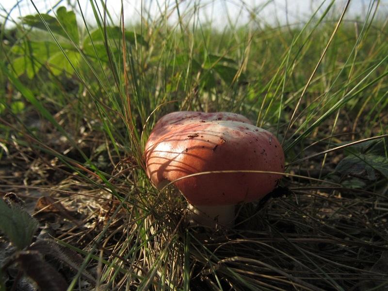 Самые грибные места в Северном Казахстане