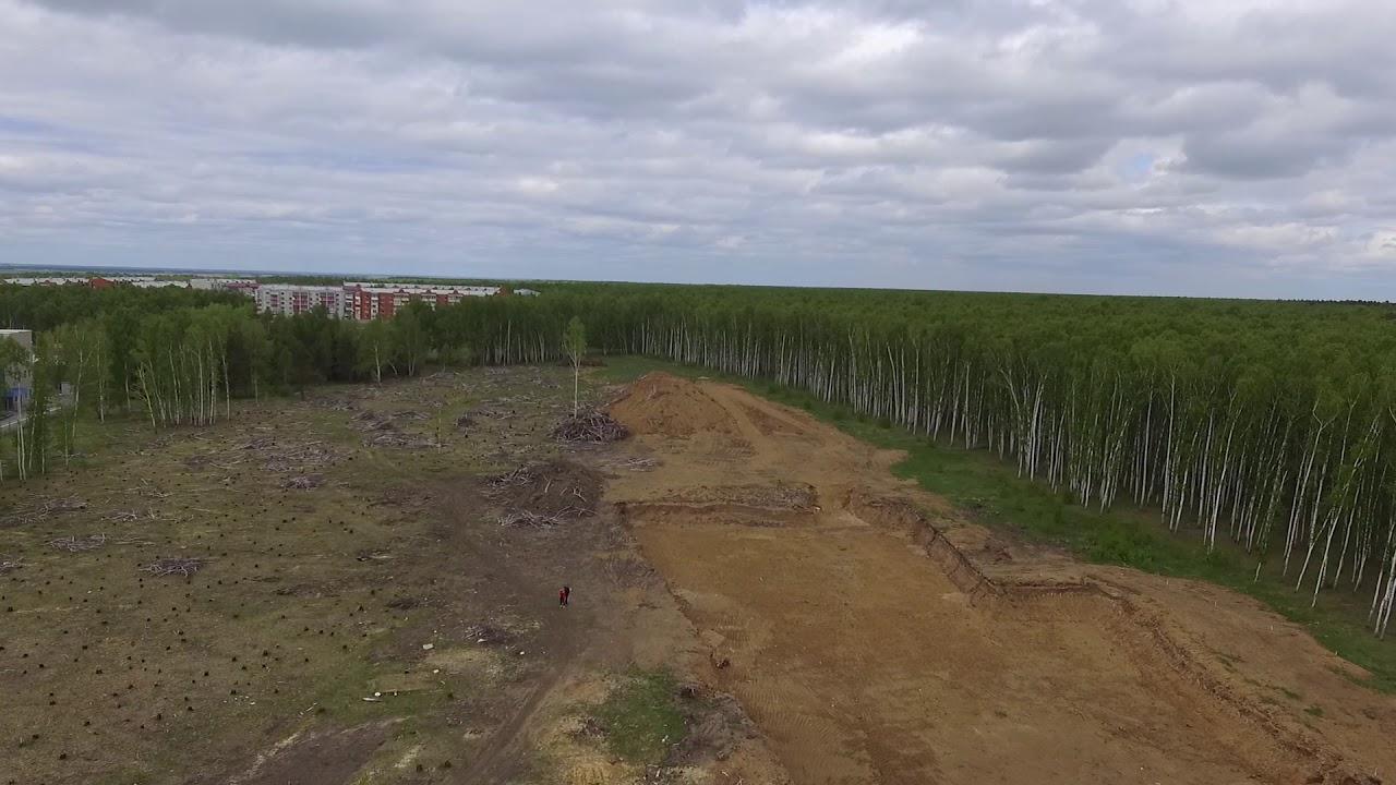 Пустыня: кто съел лес в Петропавловске