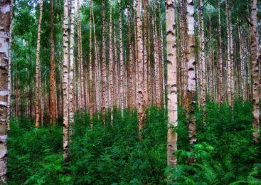 На севере Казахстана директора лесного хозяйства  осудили за взятку