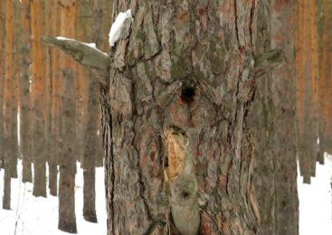 Петропавловск: короткая история Мещанского леса
