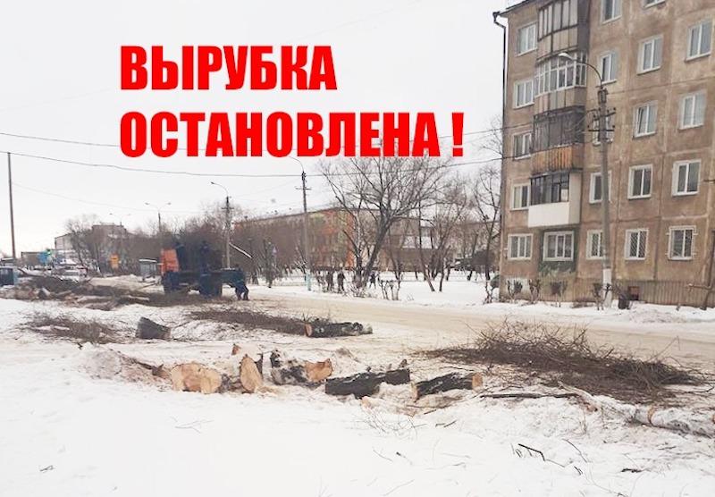 Вырубка деревьев в Петропавловске велась с нарушениями — прокуратура СКО