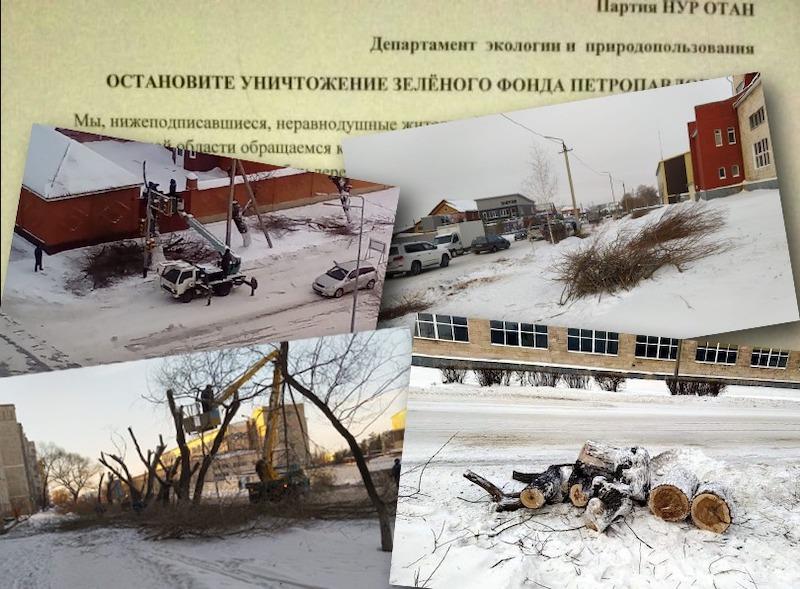 В Петропавловске собирают подписи против уничтожения деревьев