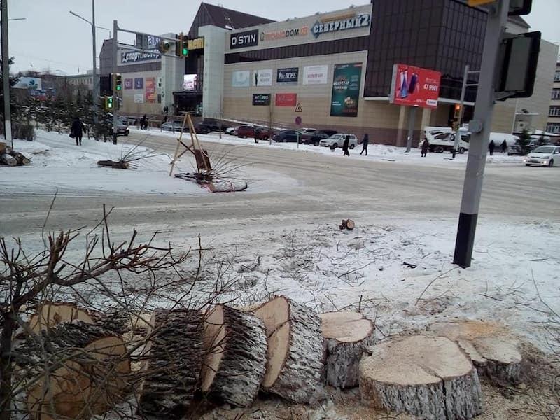Накажут ли чиновников Петропавловска за уничтожение деревьев?
