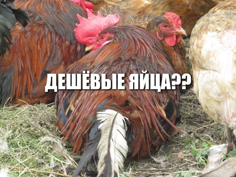 В Петропавловске — самые дешевые яйца в стране?