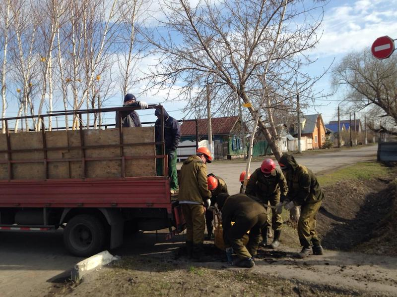 На улице Потанина в Петропавловске началась высадка деревьев