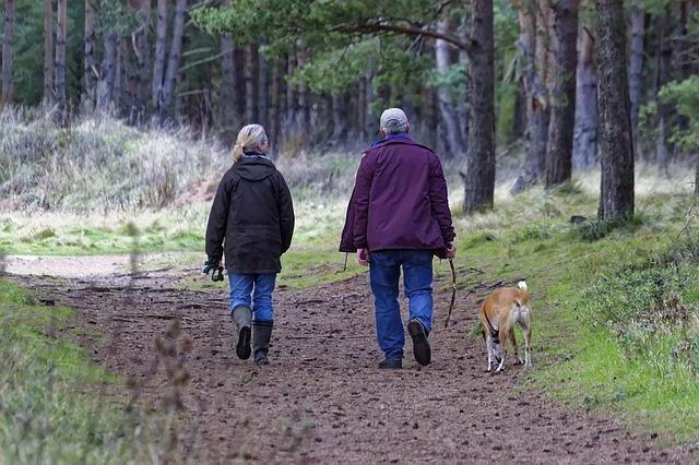 Карантин в Петропавловске: людям не разрешают выгуливать собак