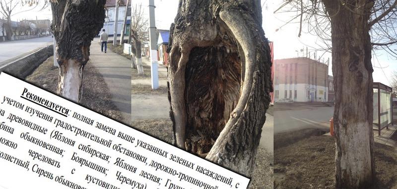 В Петропавловске предложили засадить улицы сиренью и рябиной
