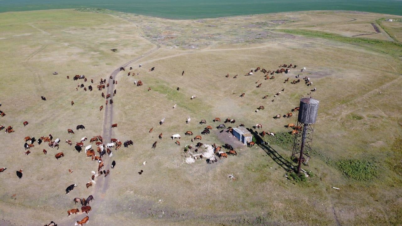 Как умирают деревни Северного Казахстана: Молодогвардейское
