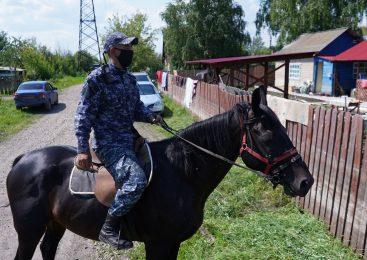 Пьяный житель Петропавловска разбил окна в дачном сообществе