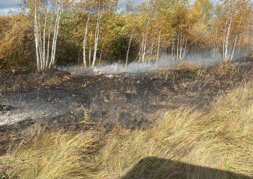 Берёзовый лес сгорел на севере Казахстана