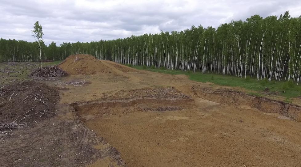 Буллинг Мещанского леса или абсурдная бюрократия Петропавловска