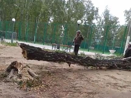 В селе на севере Казахстана лес вырубили ради безопасности