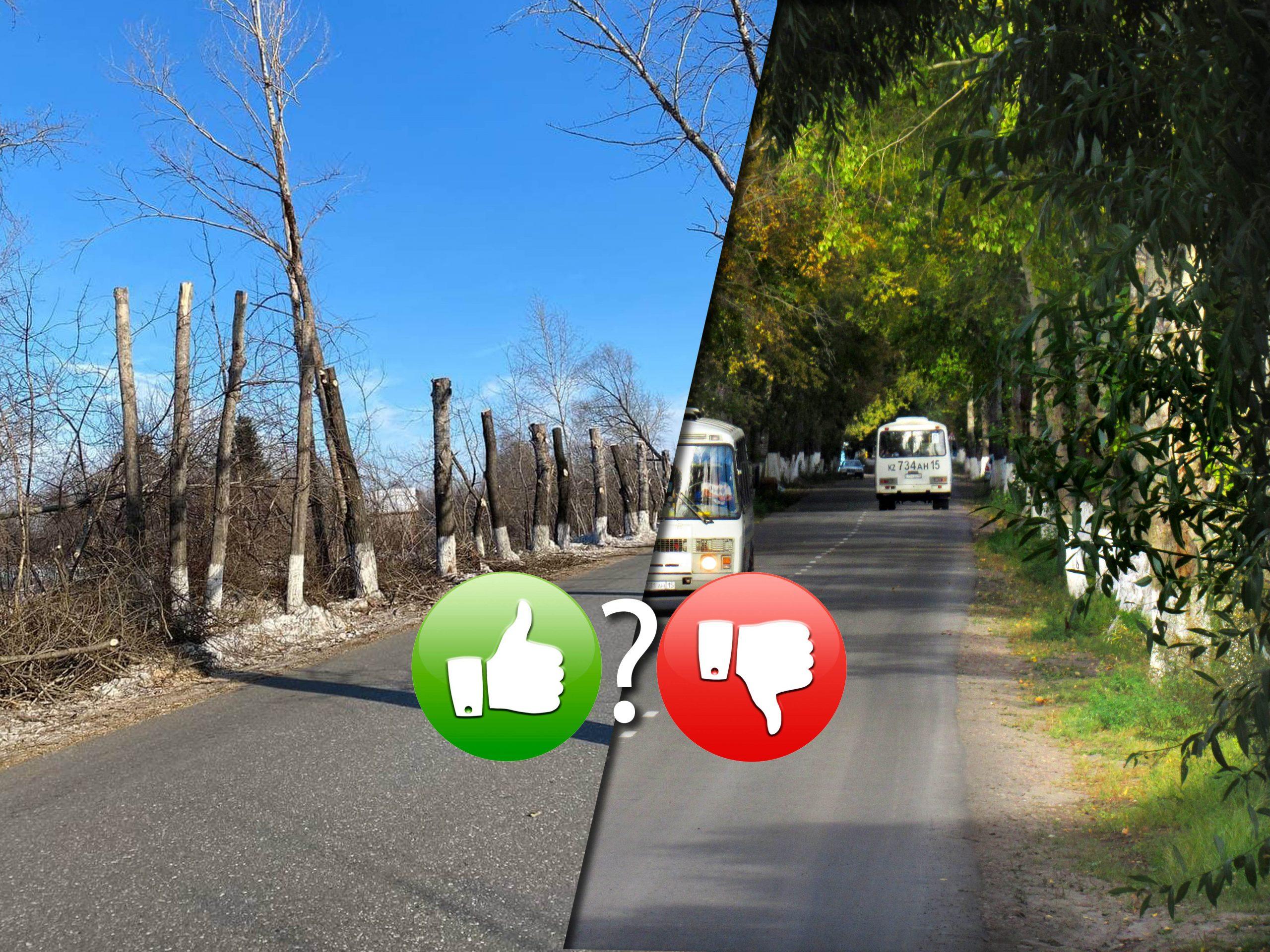 Убийство в Заречном поселке Петропавловска: деревьям не жить!