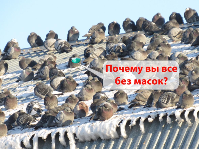 Жителей Петропавловска штрафуют за игнорирование масочного режима