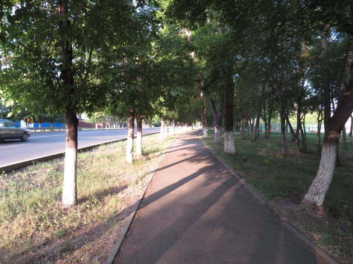 В Петропавловске искореняют издержки военного времени: вакиматеотказались от побелки деревьев