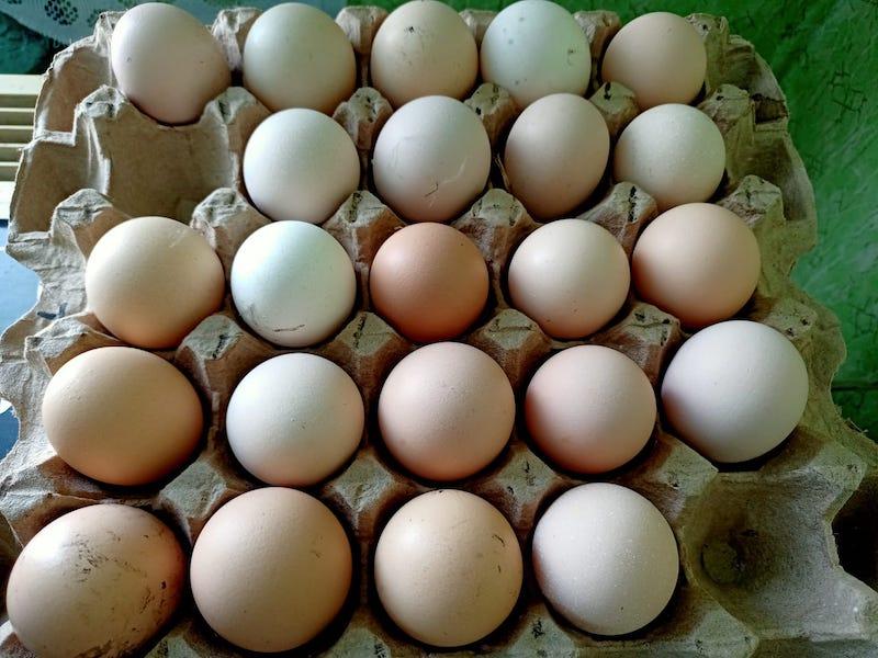 Почему яйца и мясо на севере Казахстана не могут не дорожать