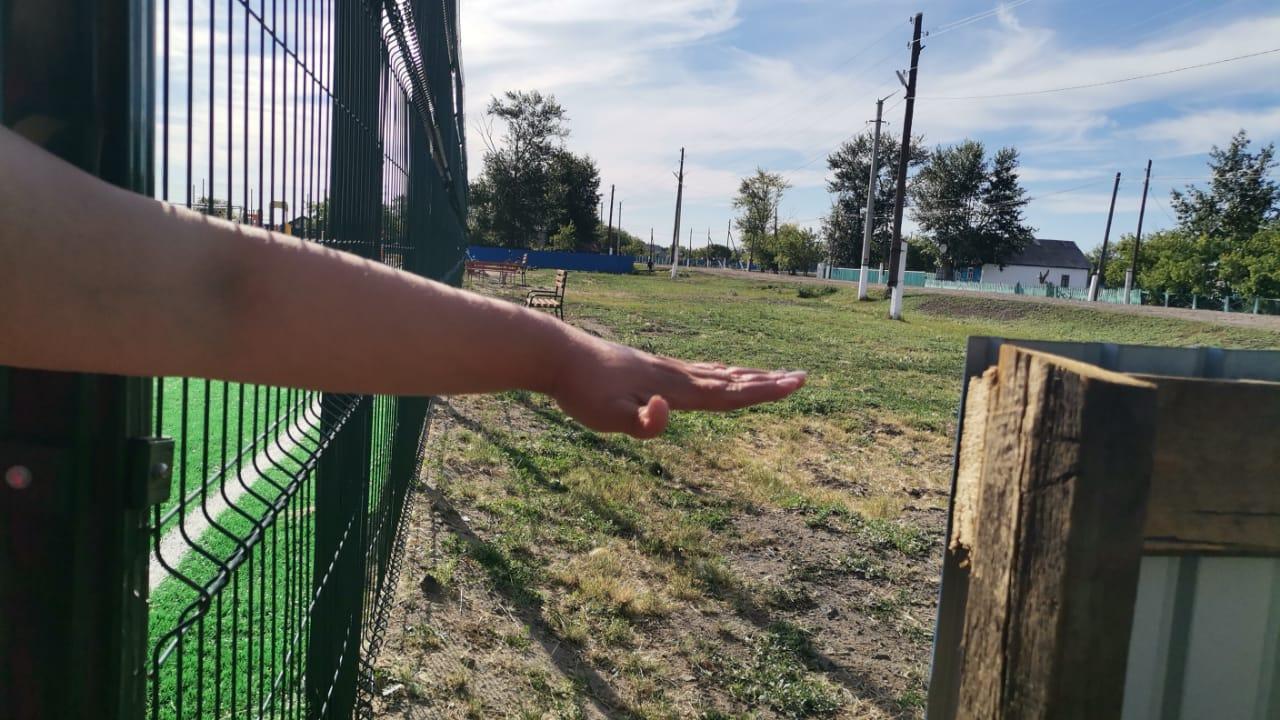 На севере Казахстана в странном заборе сделали калитку на полкоровы