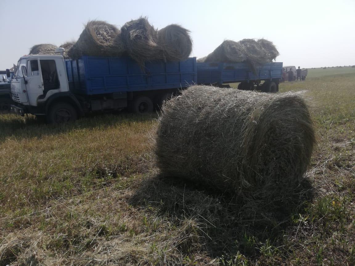 Есть ли на севере Казахстана сено по адекватной цене