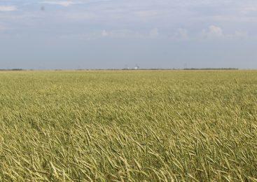 На севере Казахстана аграрию незаконно отказали в субсидиях