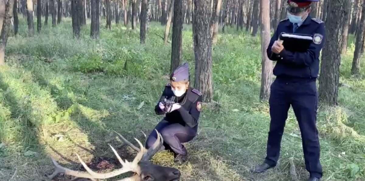 На севере Казахстана задержанные браконьеры оказались егерями